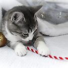 Silver loves Christmas... decorations.. by Tamara Travers