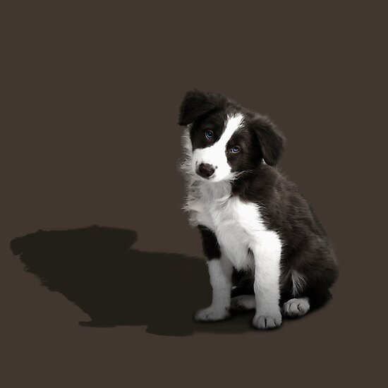 Border Collie Puppy by Andrew Bret Wallis