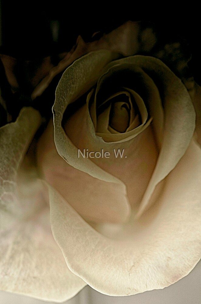 soft white in the shadow by Nicole W.