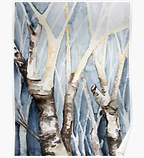 Dreaming Birch Trees Poster