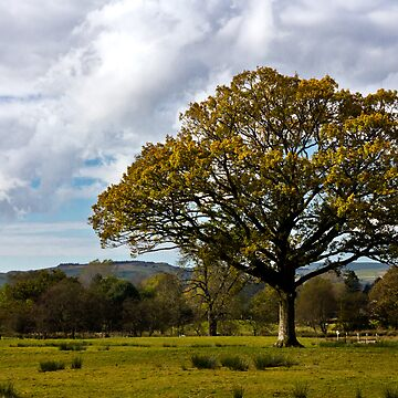Autumn Day, Sedbergh by marcogolfo