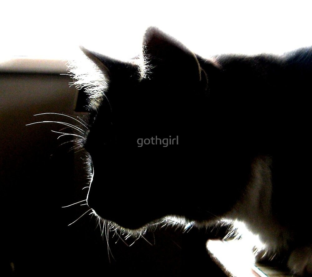 CAT SILHOUETTE by gothgirl