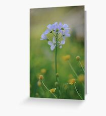 A Cuckoo flower emerges at Downton Abbey Greeting Card
