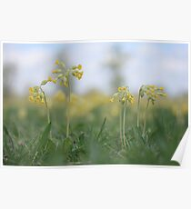 An emergence of cowslip at Downton Abbey Poster