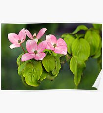 Soft Pink Flowers of the Deep Woods Poster