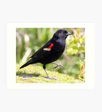 Chipper Red-Winged Bird Art Print