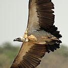 Beauty on the wing by Explorations Africa Dan MacKenzie