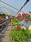 Hanging Baskets by FrankieCat