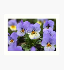 Lavender Faces With Yellow Highlights Art Print