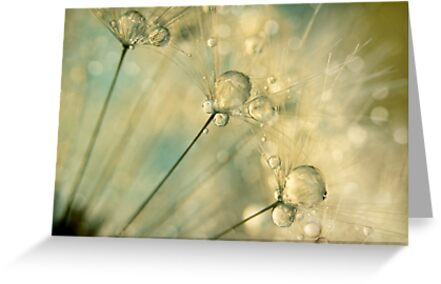 Dandy Drops & Sparkles by Sharon Johnstone