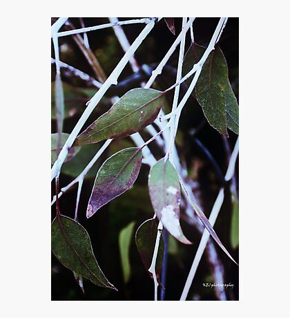 leaf & twig abstract Photographic Print