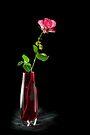 Flower Power by DonDavisUK