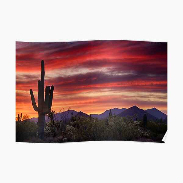 Red Hot Sonoran Sunset Poster