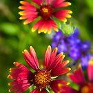 The Colors of Summer  by Saija  Lehtonen
