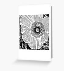 A Flower In Black & White Greeting Card