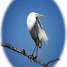 Egret Portrait by Sharon Woerner