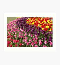 Tulip Garden in the Mid-day Sun Art Print