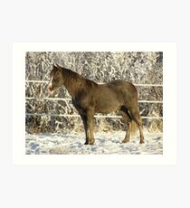 Tennessee Walker Art Print