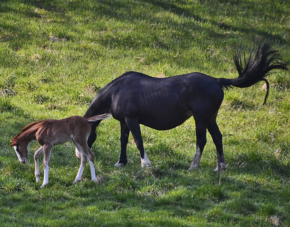 Mare And Her Foal by lynn carter