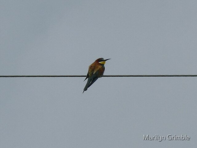 BEE- EATER by Marilyn Grimble