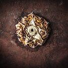 Ananas comosus on rust plate by MikkoEevert