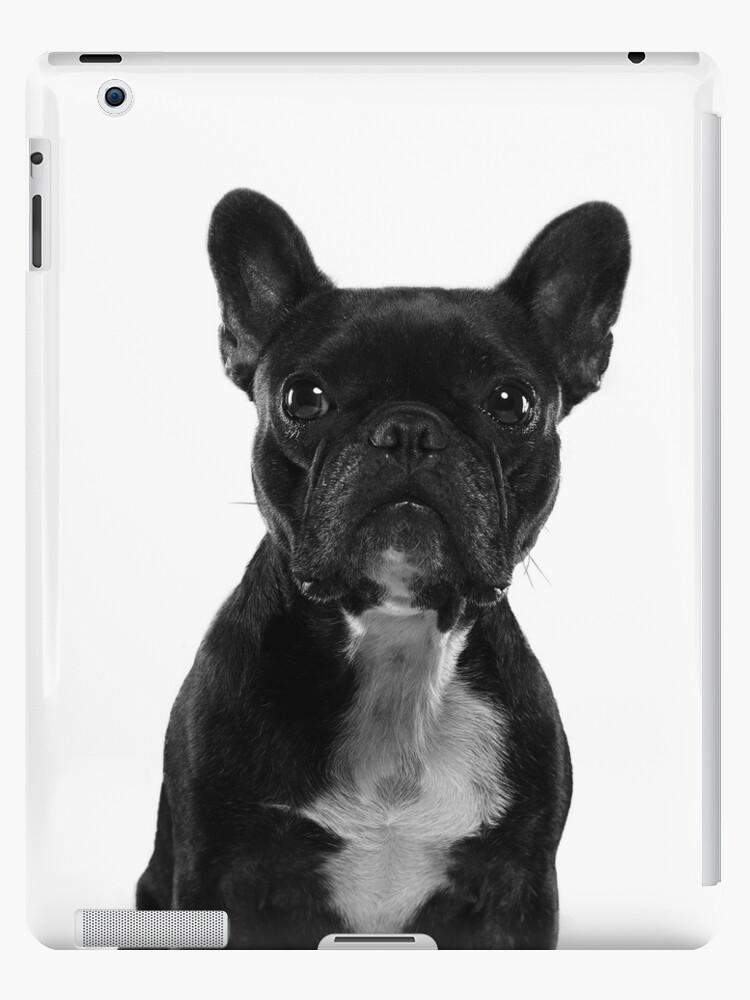 «Sushi The Little French Bulldog Portrait» de pierrecrot