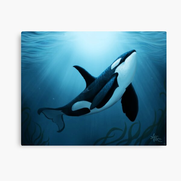 """""""The Dreamer"""" by Amber Marine ~ (Copyright 2015) orca art / killer whale digital painting Canvas Print"""