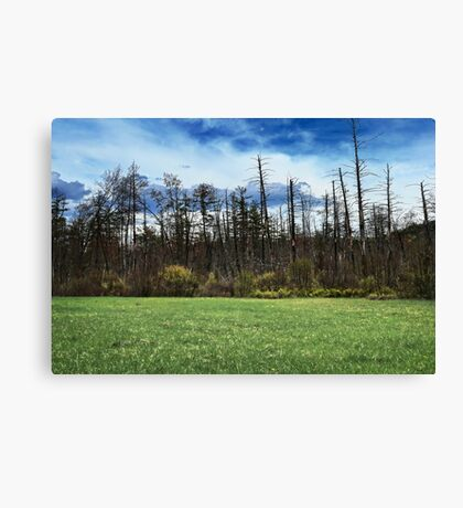 Swamp Meadow Canvas Print