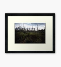 Swamp Brush Framed Print