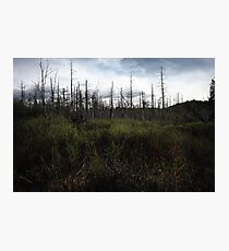 Swamp Brush Photographic Print