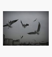Flying... Photographic Print