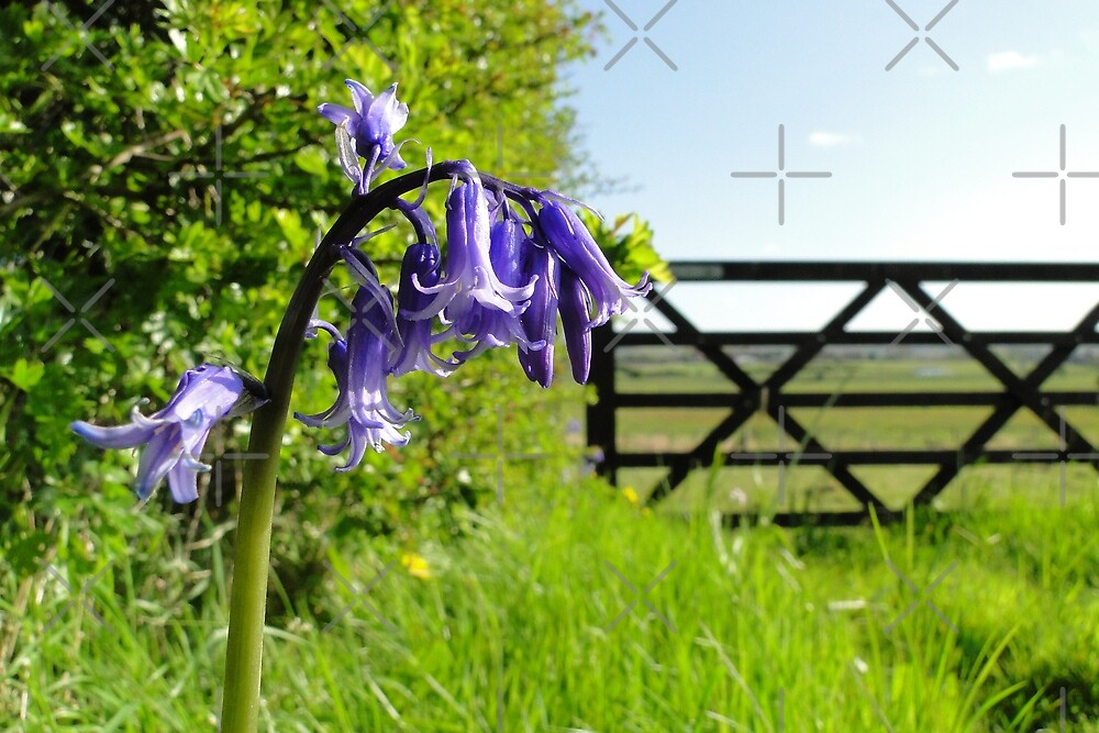 The Bluebell Gatekeeper by Barrie Woodward