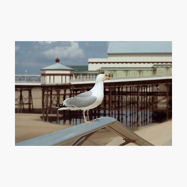 Vintage Seagull Photographic Print