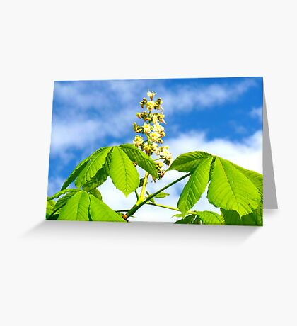 Chestnut in bloom Greeting Card