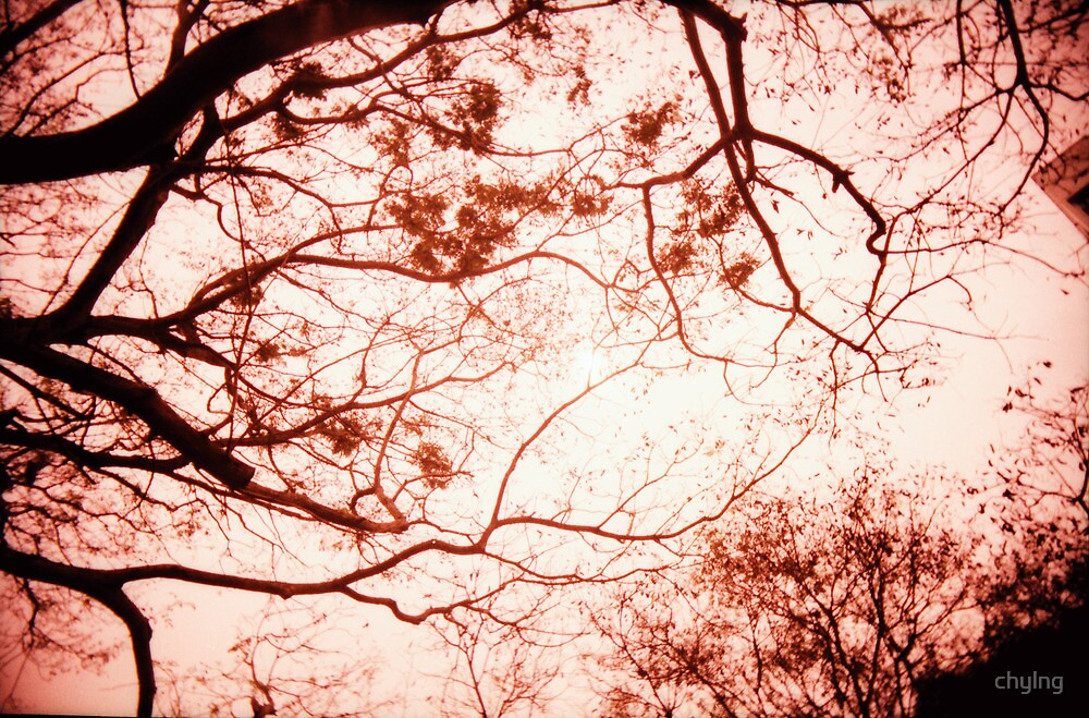 Of Trees, Leaves and Branches - Lomo by chylng