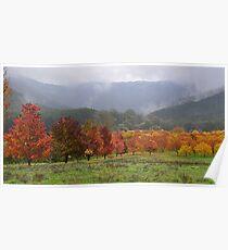 Autumn, Myrtleford, Vic Poster