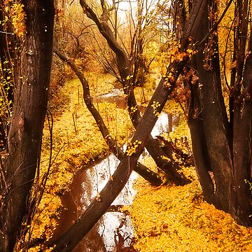 Yellow Wood by renilicious