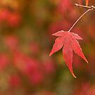 Autumn Red - Singular by Erin Guest