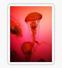 Portrait of a Jellyfish- Pink Sticker