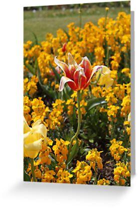 Victoria Park Flowers by Lillie Halton
