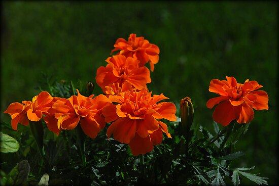 Orange by jodi payne