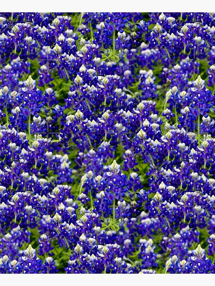 Texas Bluebonnets by aimeewilson