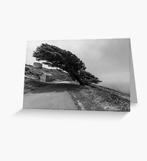 The Tree at Point Reyes  Greeting Card