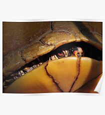 Eastern Box Turtle (three-toed Box Turtle) Poster