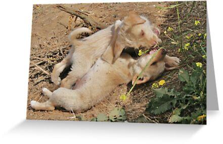 Brotherly Puppy Fight by Daniela Weil