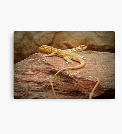 Common Side-blotched Lizard (Pair) Canvas Print