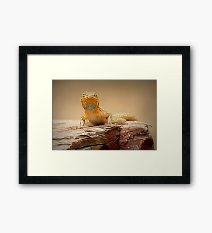 Common Side-blotched Lizard~ Eye Contact Framed Print