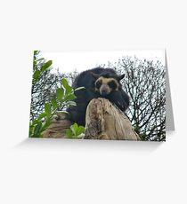 Spectacled Bear Grußkarte