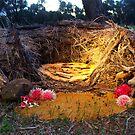 238/365 the nest by LouJay