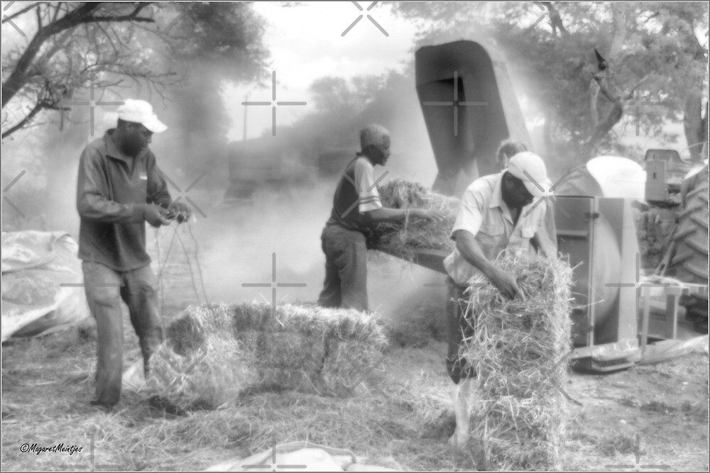 THE FARM WORKERS AT WORK by Magriet Meintjes